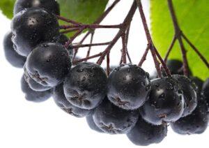 aronia-berry