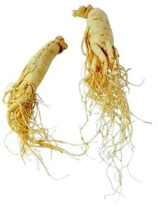 root-ginseng